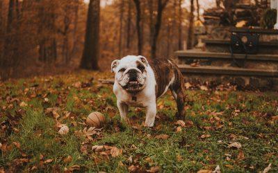 ¿Cómo influye la dieta de tu perro en su comportamiento?