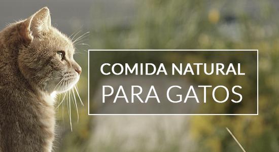 Comida natural para gatos