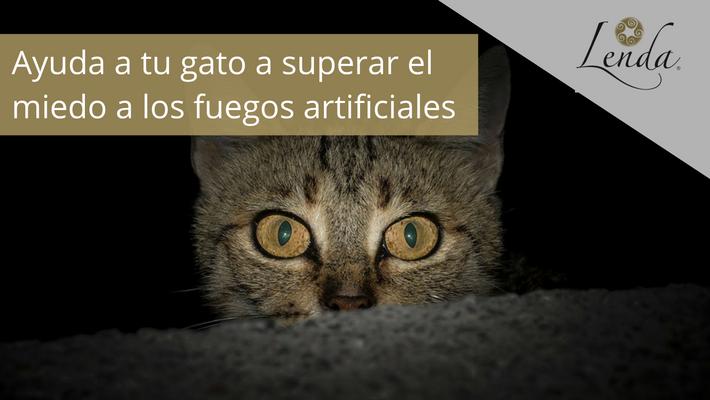 Ayuda a tu gato a superar el miedo a los fuegos artificiales