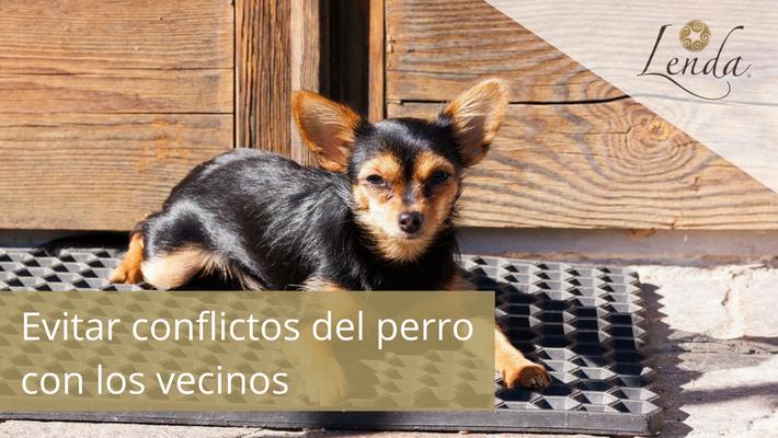Evitar conflictos del perro con los vecinos