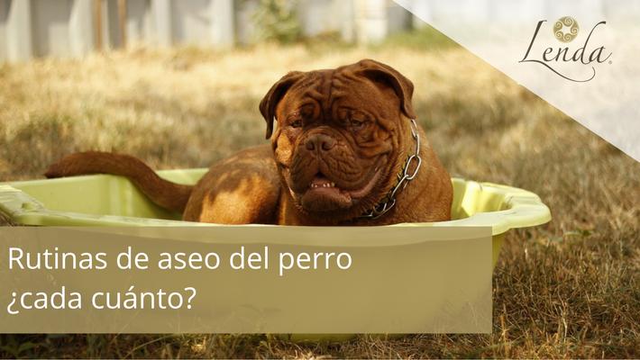 Rutinas de aseo del perro cada cuanto lenda - Cada cuanto banar a un perro ...