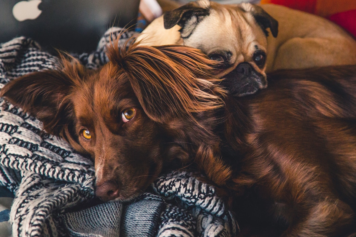 diarrea y perdida de apetito en perros