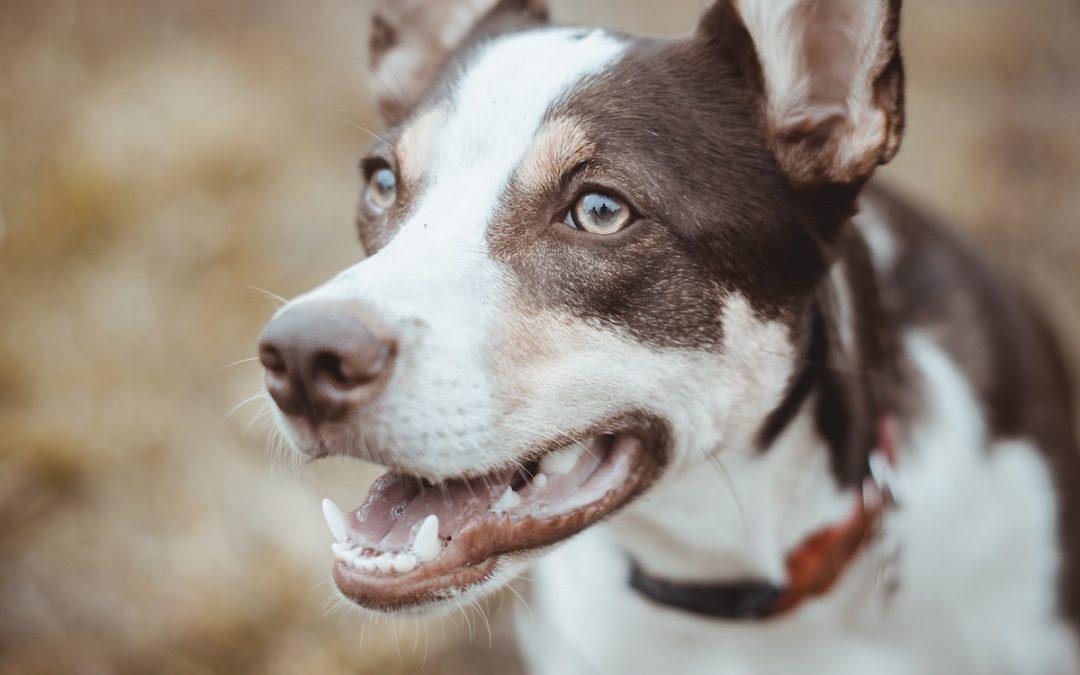 problemas-dentales-del-perro