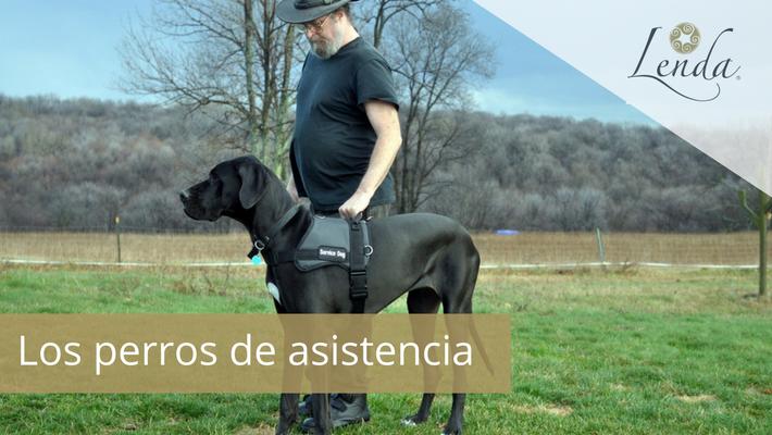 Los perros de asistencia
