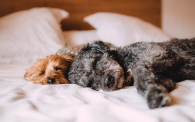 10 trucos para mantener la casa limpia si vives con un perro