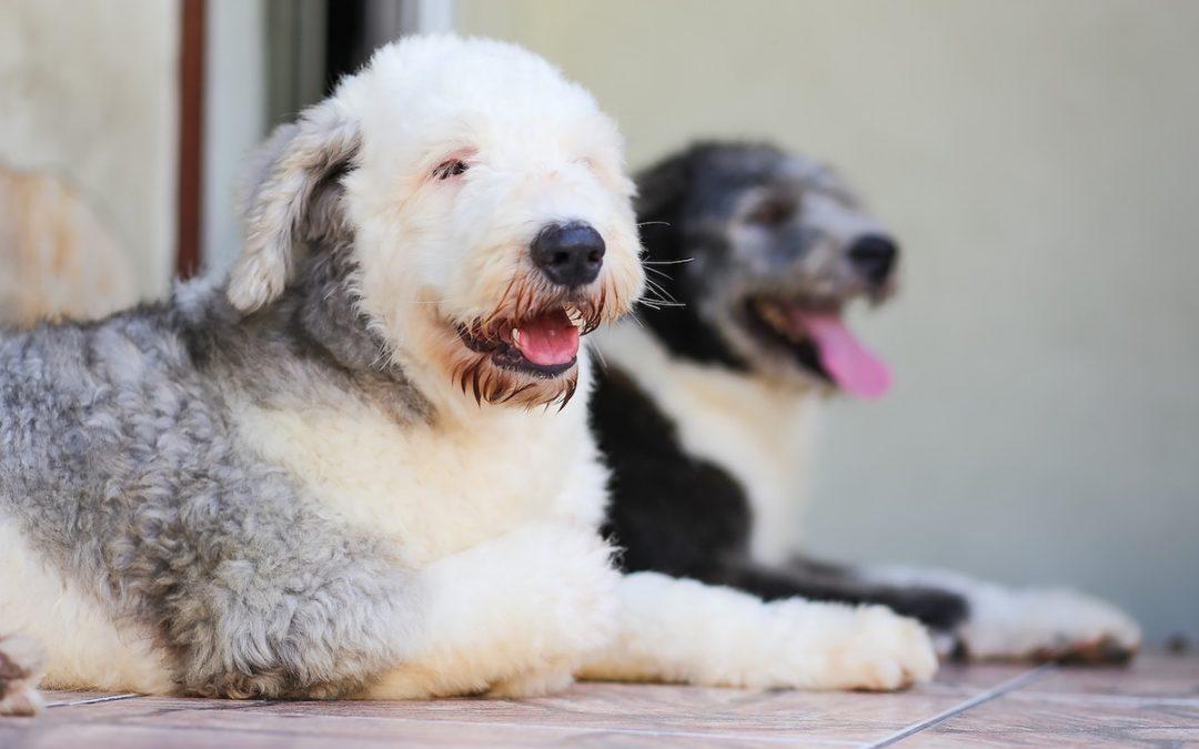 bulto en la piel perro