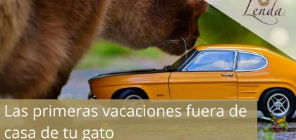 Las primeras vacaciones fuera de casa de tu gato