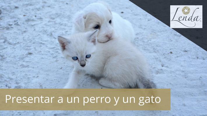 Presentar a un perro y un gato