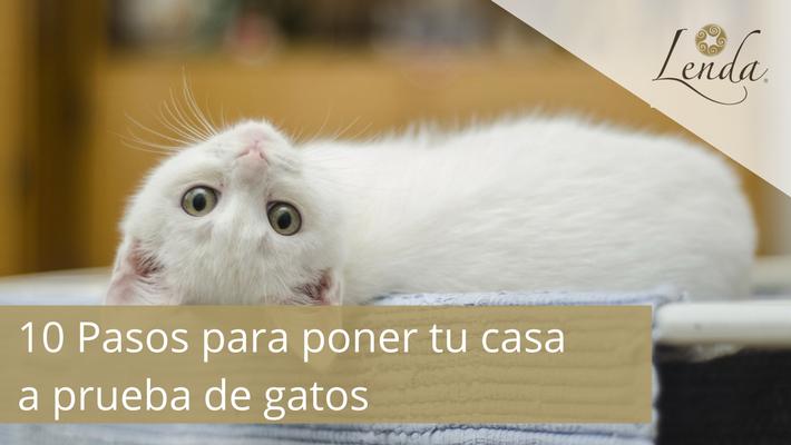 10 Pasos para poner tu casa a prueba de gatos