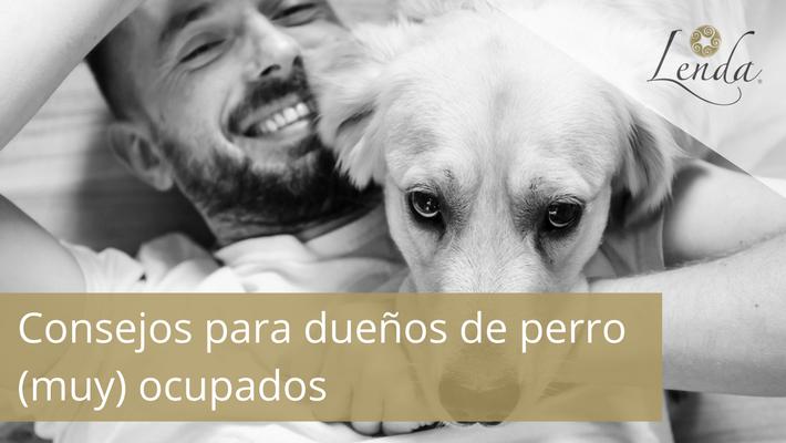 Consejos para dueños de perro (muy) ocupados