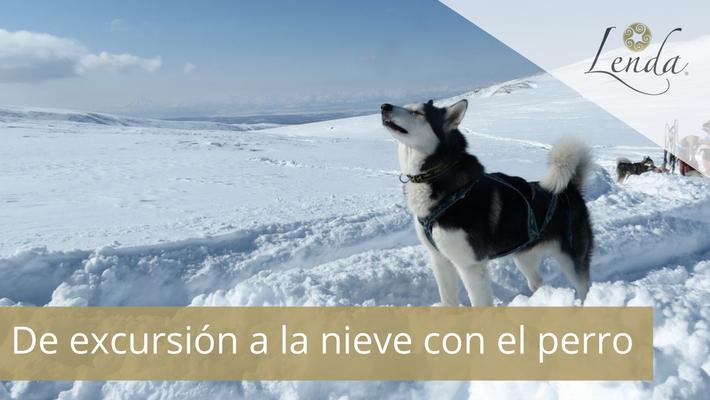 De excursión a la nieve con el perro