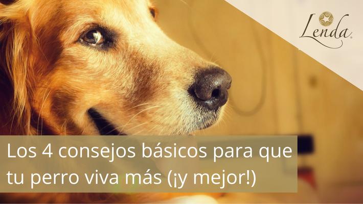 Los 4 consejos básicos para que tu perro viva más (¡y mejor!)