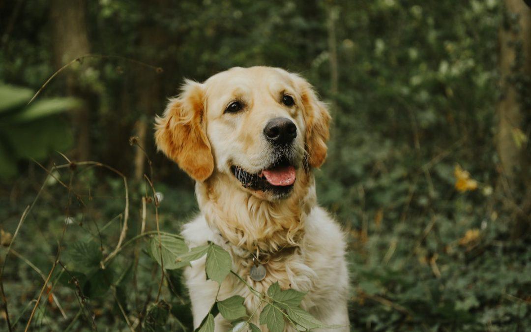 Propósitos de año nuevo con tu perro