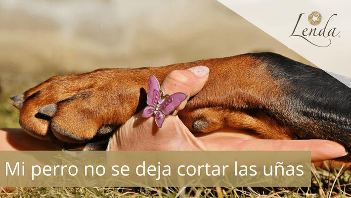 ¿Cómo cortar las uñas de los perros?