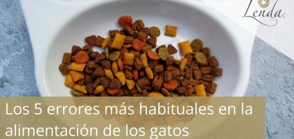 Los 5 errores más habituales en la alimentación de los gatos