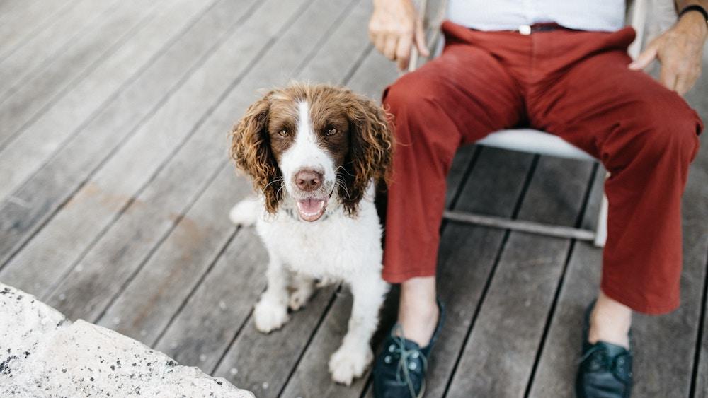 Conoce los beneficios de las mascotas en la tercera edad