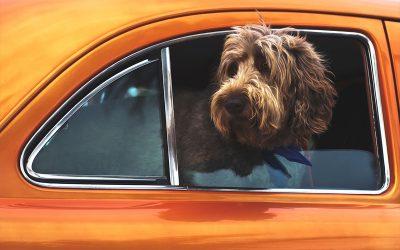 Viajar con perro. ¡Todo lo que necesitas saber si te vas de vacaciones!