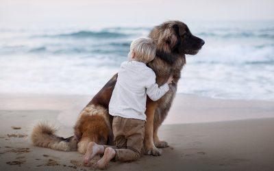 Guía para afrontar la pérdida de un perro
