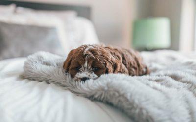 Temblores en perros: ¿a qué se deben y cómo tratarlos?