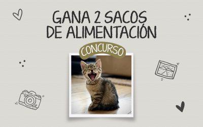 ¡Finalizado! Concurso fotográfico con motivo del Día Internacional del Gato