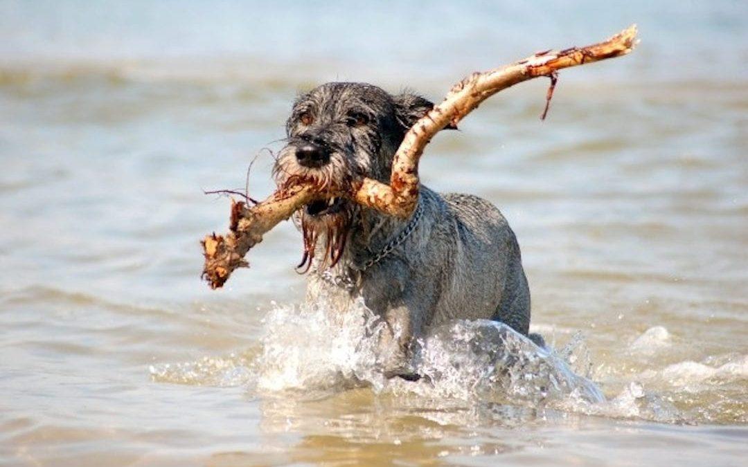 Cinco consejos básicos para cuidar de tu perro en verano