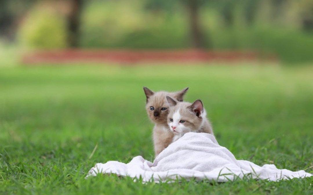 El gato que inspiró a Isaac Newton