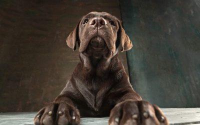La artritis canina