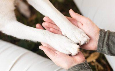 10 Consejos para mantener las pezuñas de tu perro
