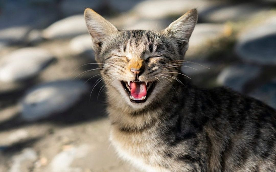 Curiosidades del gato
