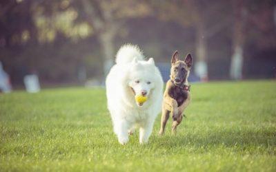 Qué hacer cuando dos perros se pelean