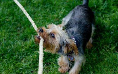 Eco mascotas: 5 consejos para reducir su impacto medioambiental
