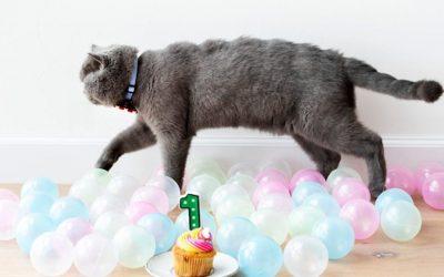 ¿Cuántos años humanos tiene mi gato?