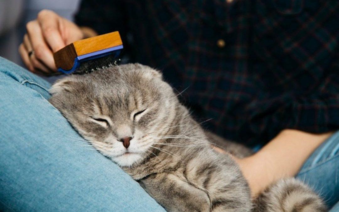 5 Consejos para evitar las bolas de pelo en los gatos