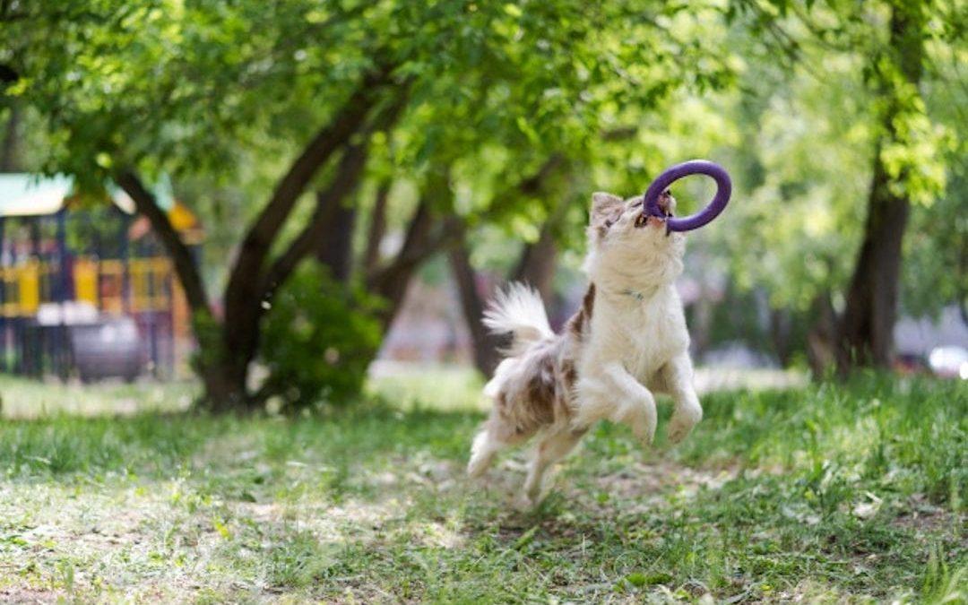 Cómo hacer deporte con tu perro