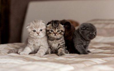 Gatitos recién nacidos