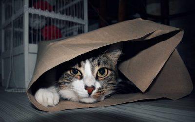 7 Consejos para llevar a tu gato al veterinario