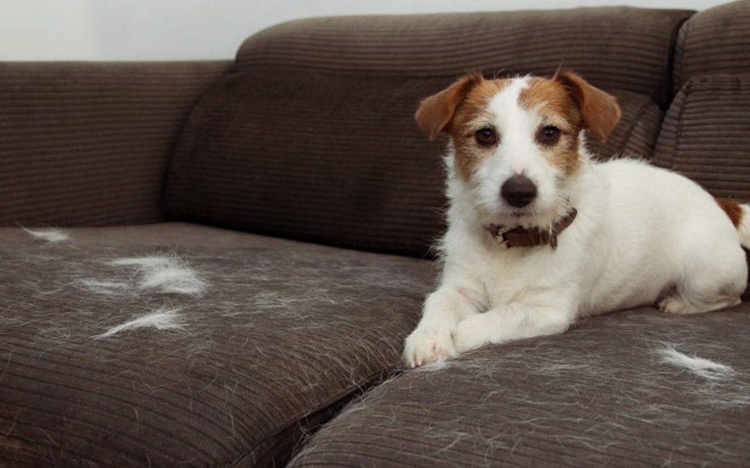 Mejorar el pelaje del perro: Higiene y Nutrición