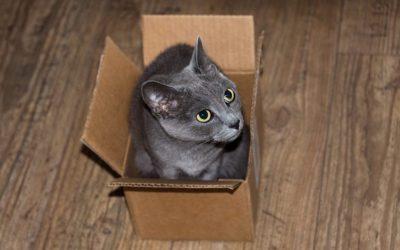Mudanza con gato