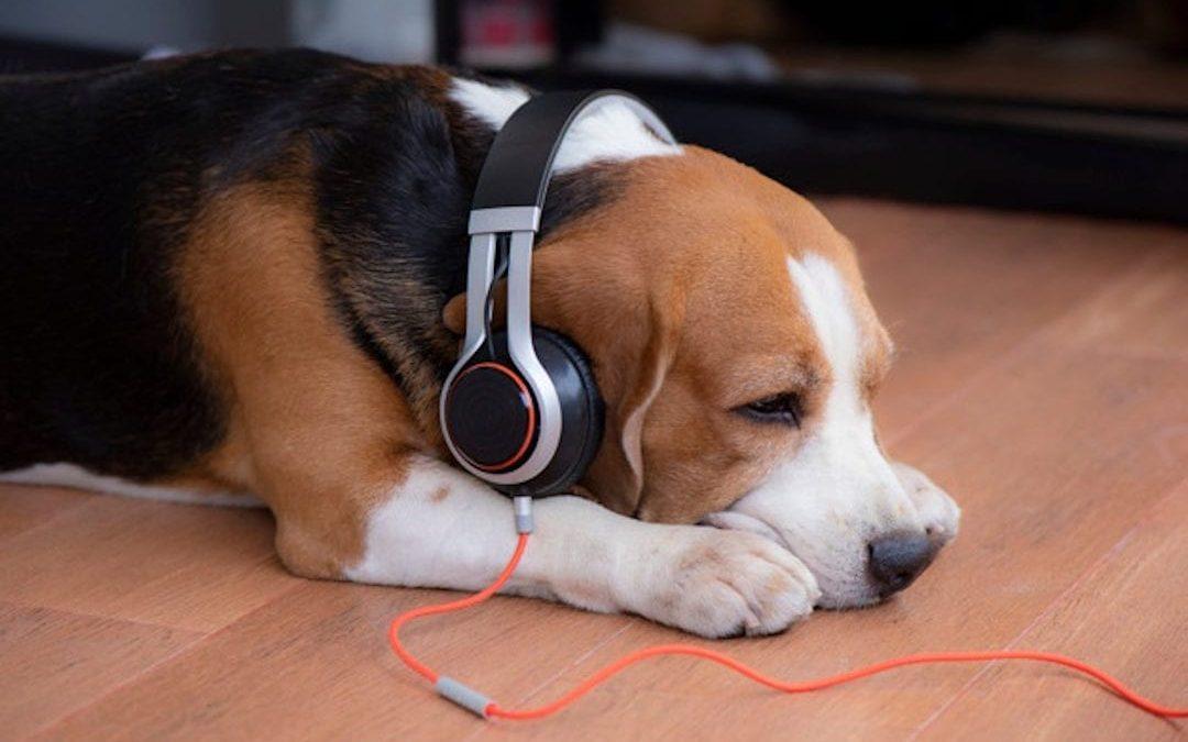 Escuchando musica con Lenda