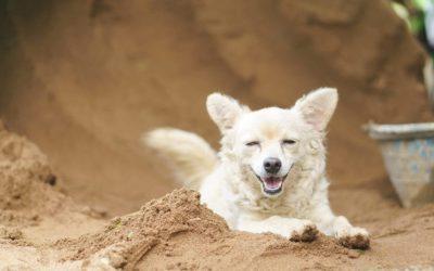 ¿Por qué los perros excavan sin parar? Causas, consejos y soluciones