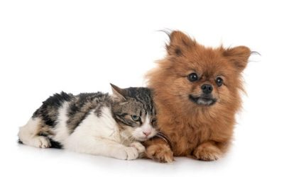Gente de perros y gente de gatos, ¿tienen diferentes personalidades?