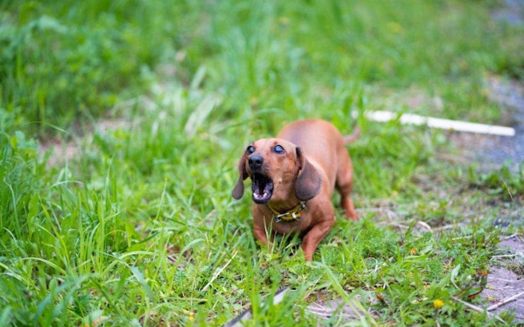 ¿Por qué ladran los perros?