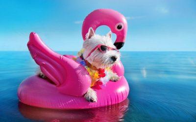 ¿Necesita tu perro un protector solar?