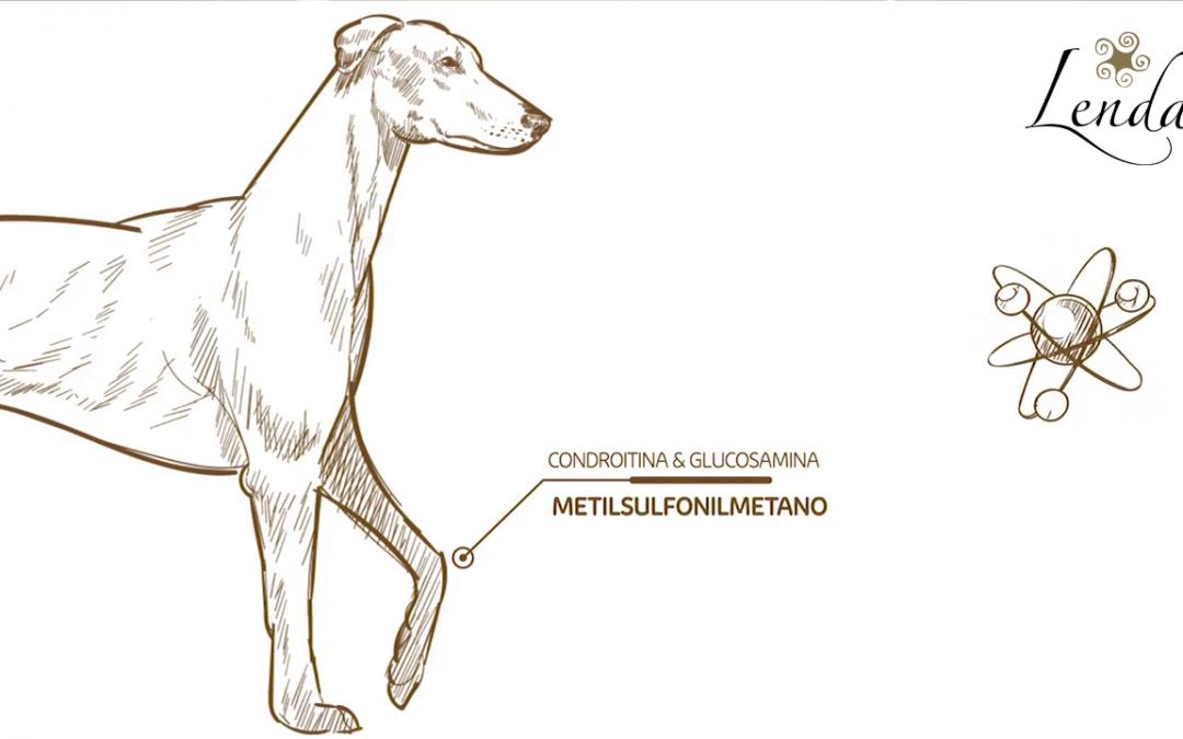 📺 MSM: qué es y qué beneficios aporta a las articulaciones de nuestros perros
