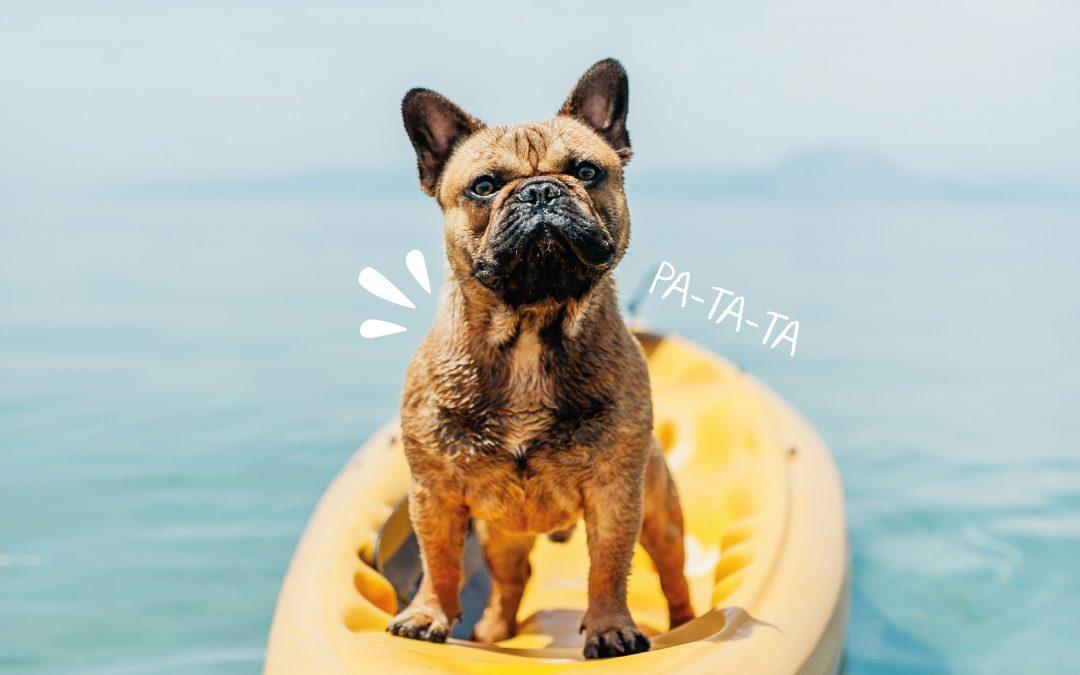 ¡Concurso! Buscamos las fotografías más «Guau» del verano