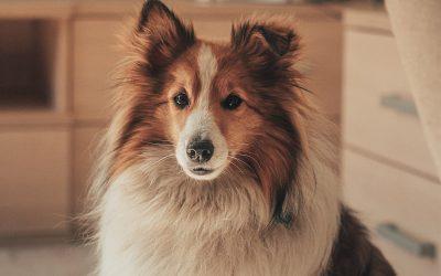 Todo lo que necesitas saber sobre la muda del pelo de tu mascota