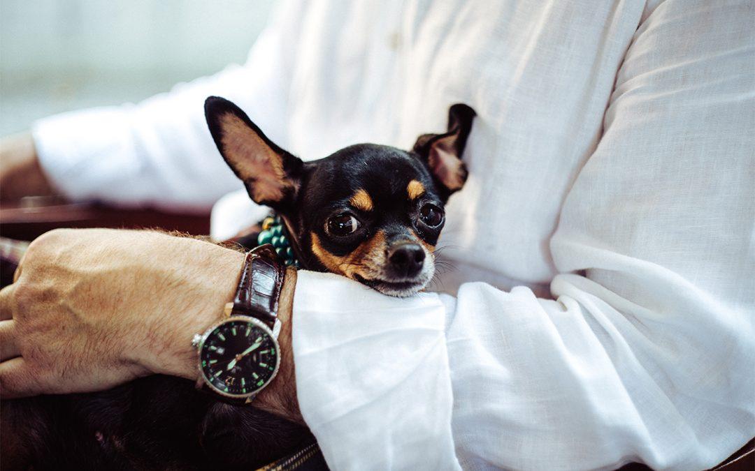 ¿Tienen peor temperamento las razas de perro pequeñas?